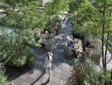 Jardin Mimosa